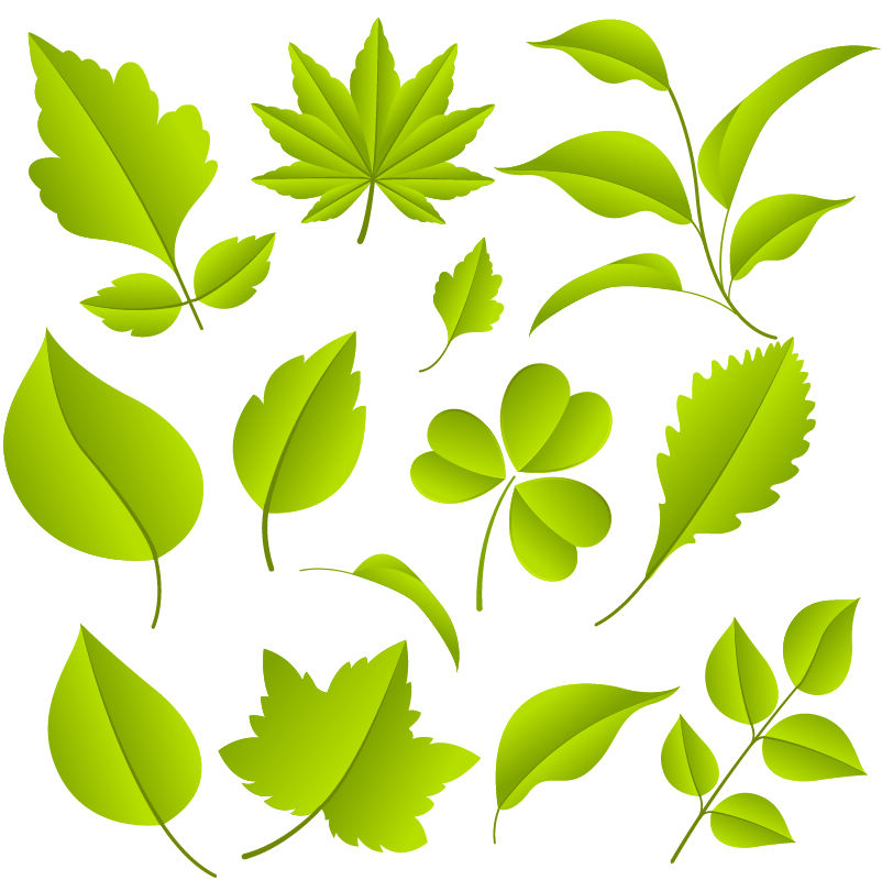 Free Green Leaves Vector Graphic Set