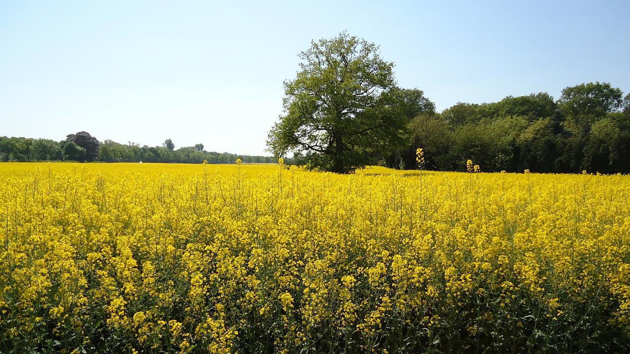 biomasa-reduce-efecto-invernadero