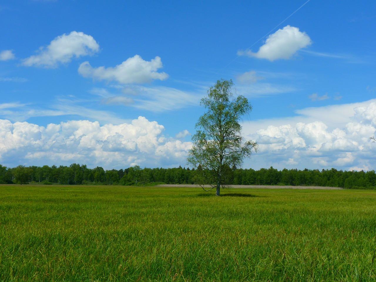 rentabilidad-biomasa