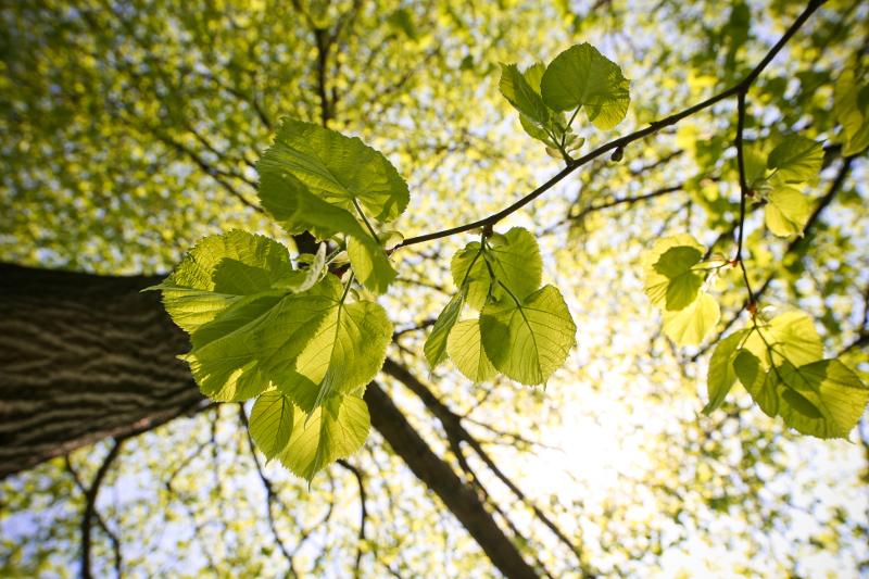 energia-solar-medio-ambiente